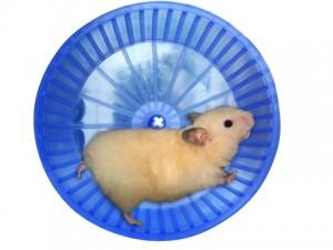 Колесо для хомяка из пищевого контейнера